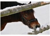 Kůň se těší zajisté, s čím dnes přijdou turisté [JP]